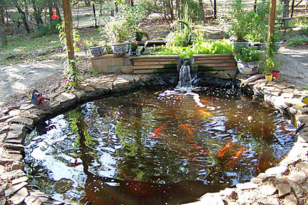Koi Pond Supplied The Water And Fish Aquaponics Tank